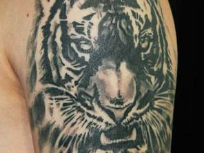 Antonio vonde tattoo studio maribor tiger black grey tattoo shoulder - črni senčeni tiger tatu